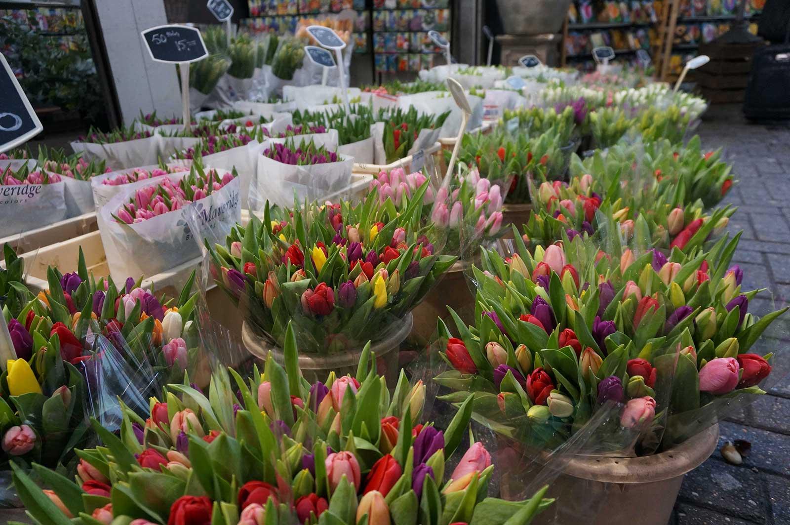 Lale - Çiçek - Amsterdam